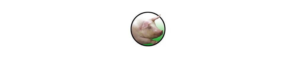 Bebederos Porcino
