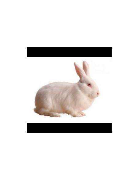Equipamiento Conejos